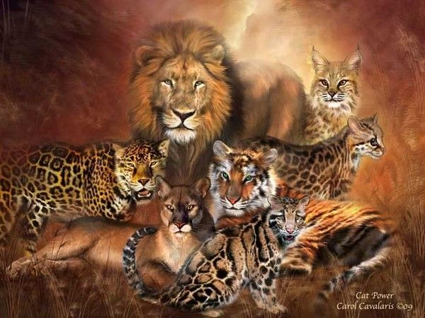 Group of wild animals together - photo#43